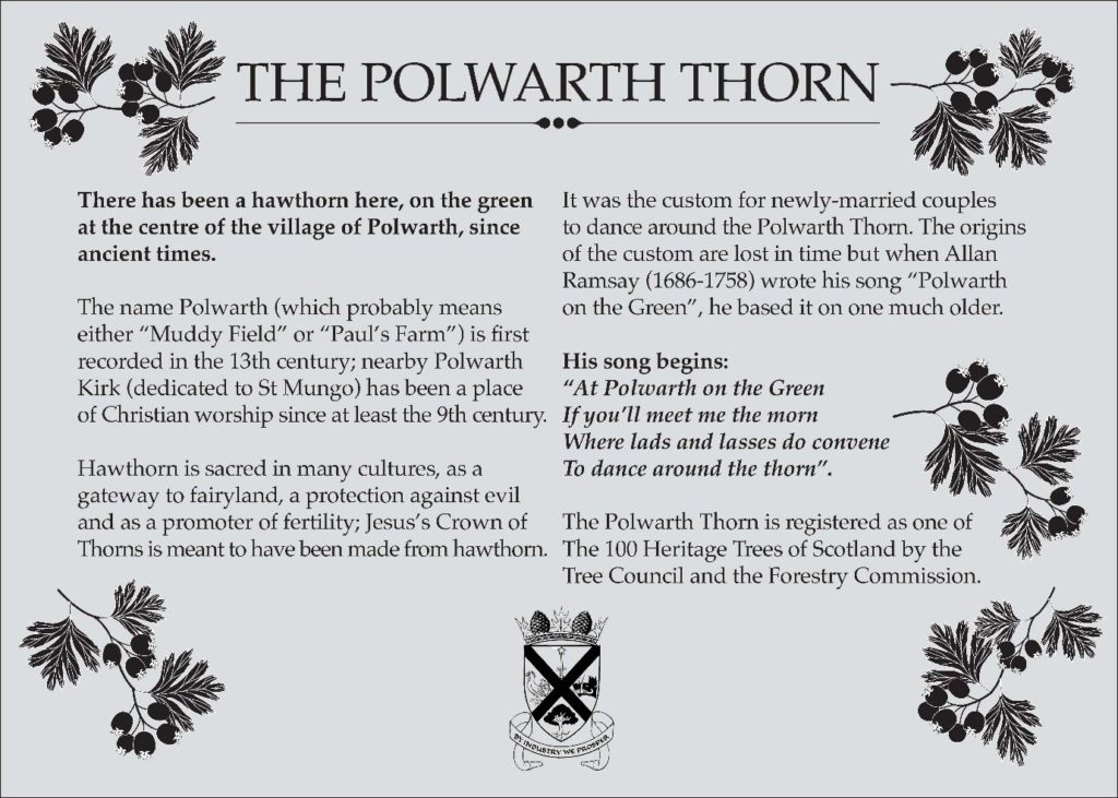 The Polwarth Thorn