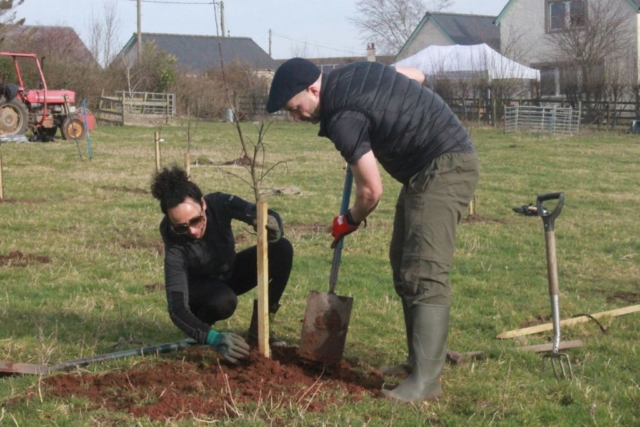 Apple tree planting 2019