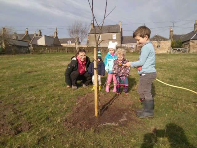 Apple tree planting 2019